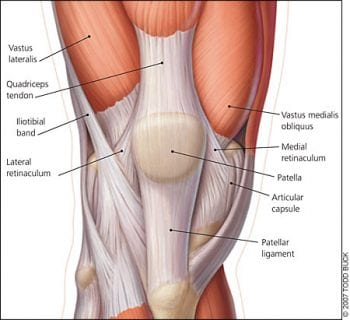 image of knee